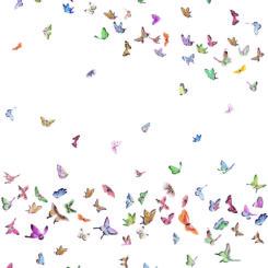 butterfly-260303