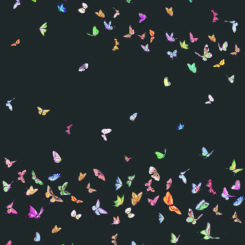 butterfly-260304