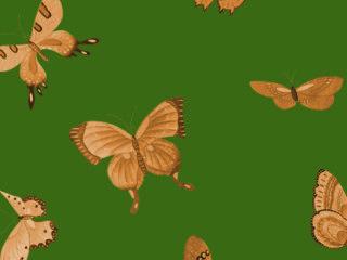 Xanadu-Butterfly