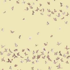 butterfly-260302