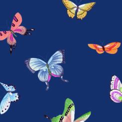 butterfly-841201