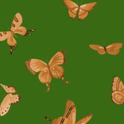 butterfly-841202