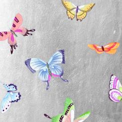 butterfly-841203