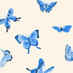 butterfly-841204