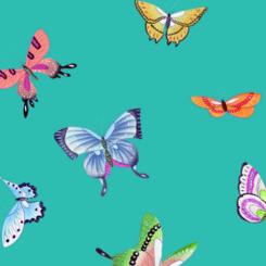 butterfly-841205