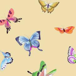 butterfly-841206