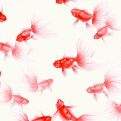 goldfish-treasures-840301