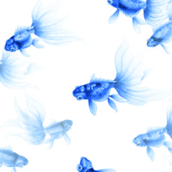 goldfish-treasures-840306