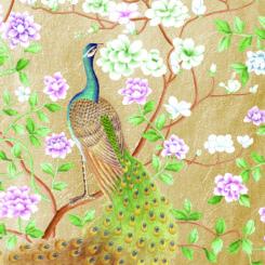 peacock-840501