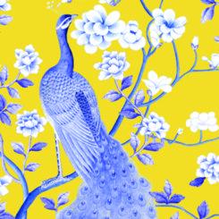 peacock-840504