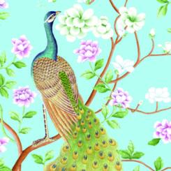peacock-840505