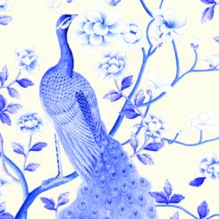 peacock-840506